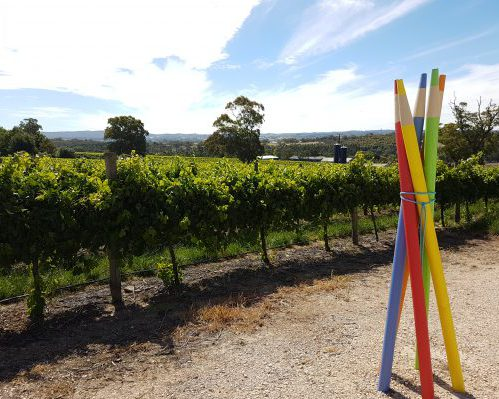Adelaide hills cellar door
